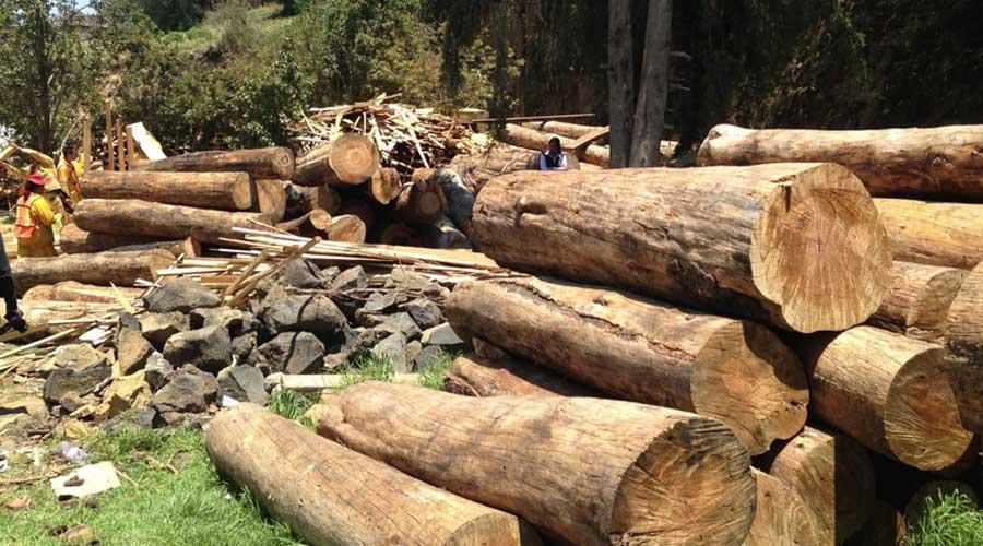 Detecta Conafor tala ilegal en cuatro regiones de Oaxaca | El Imparcial de Oaxaca
