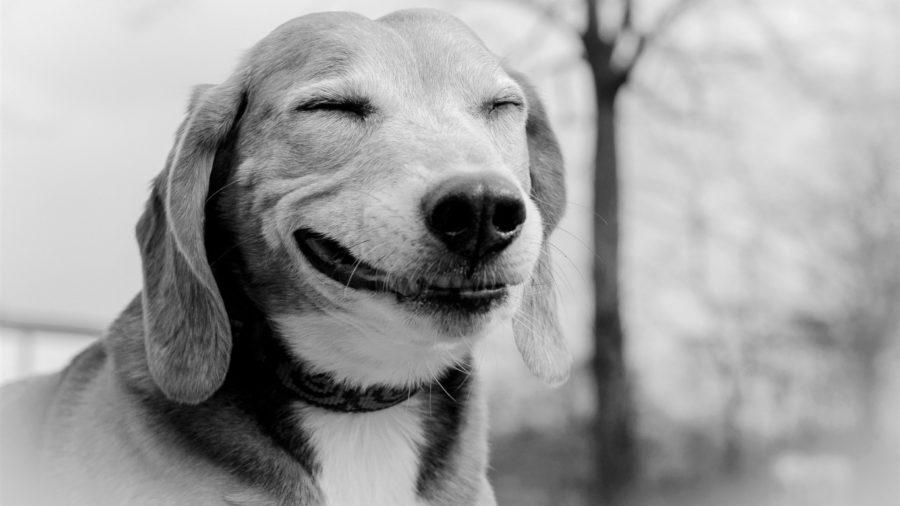 Cómo evolucionó el rostro de los perros para ser mas tiernos ante los humanos | El Imparcial de Oaxaca