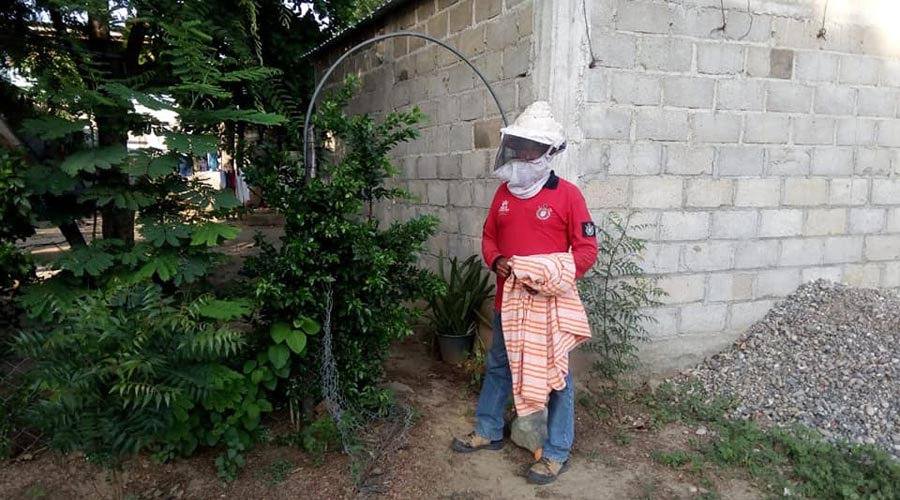 Abejas africanas atacan a un niño de Salina Cruz | El Imparcial de Oaxaca