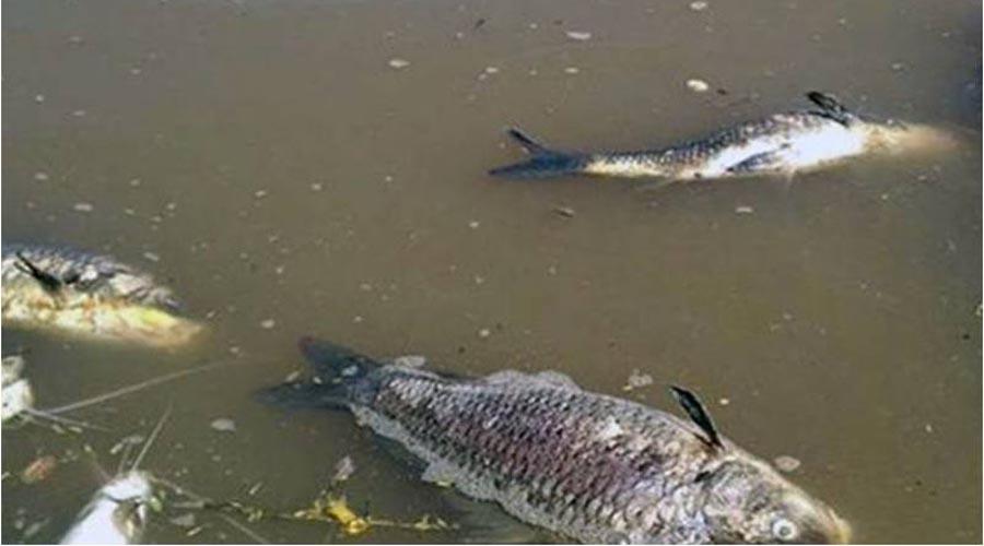 Ecocidio en ríos de Tuxtepec   El Imparcial de Oaxaca