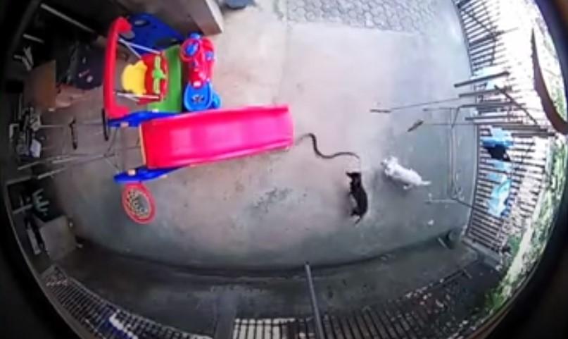 Video: perritos defienden a su familia de una cobra; uno muere y el otro queda ciego | El Imparcial de Oaxaca