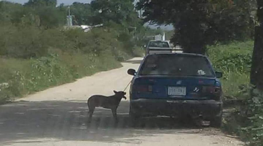 Sin cesar, se presentan casos de maltrato animal en Oaxaca | El Imparcial de Oaxaca