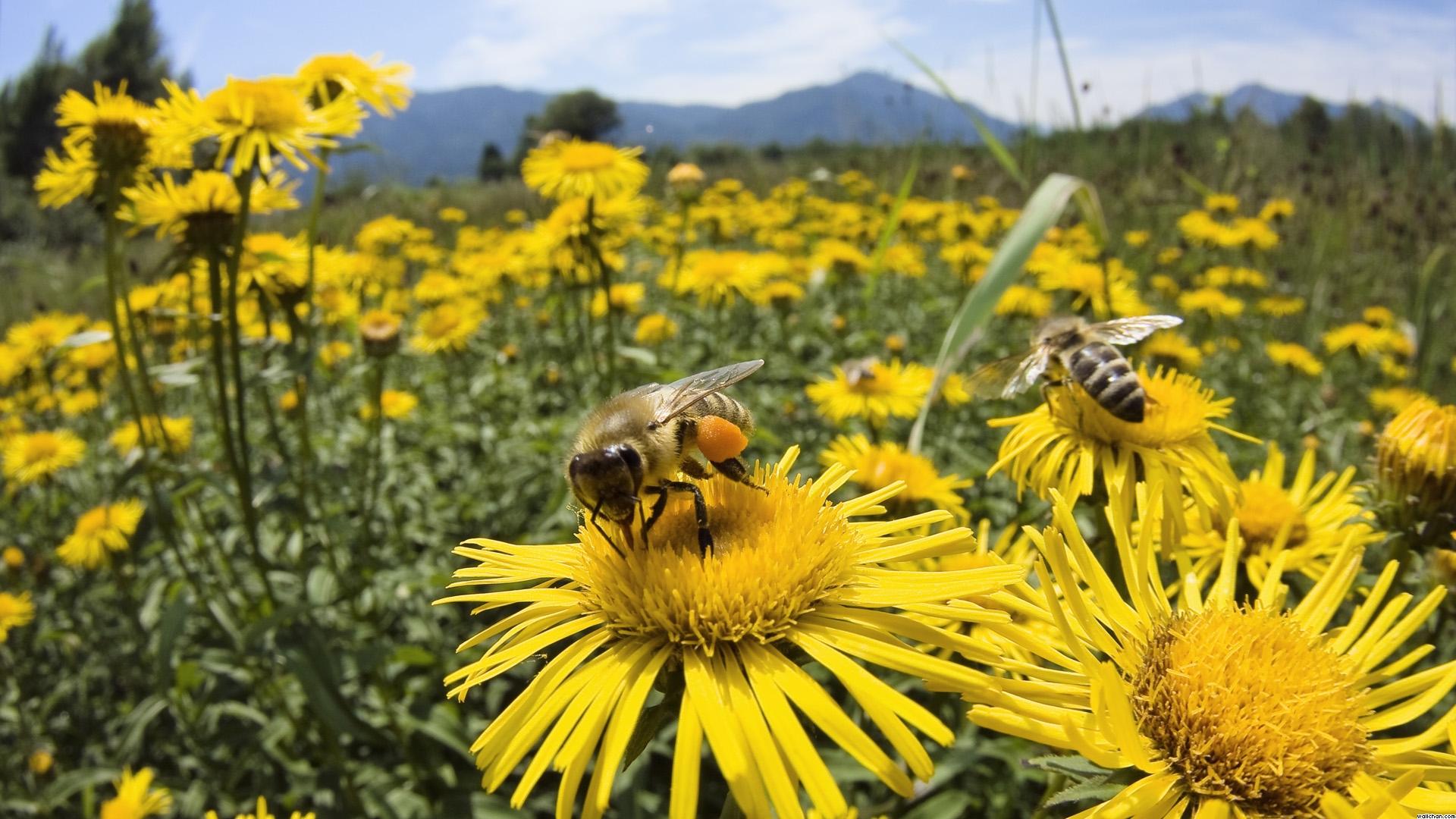 Alertan por crisis de  abejas y polinización | El Imparcial de Oaxaca