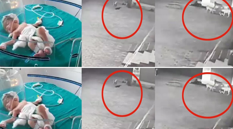 Video: Perros callejeros rescatan a recién nacida que fue abandonada en un drenaje   El Imparcial de Oaxaca