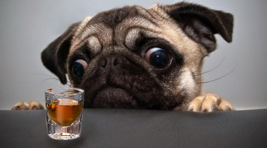 Rescatan a perro que era obligado a consumir alcohol y mariguana | El Imparcial de Oaxaca