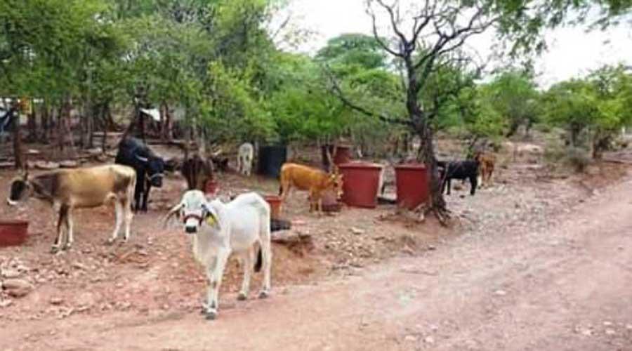 Desaparecen cabezas de ganado en Venta Uribe | El Imparcial de Oaxaca