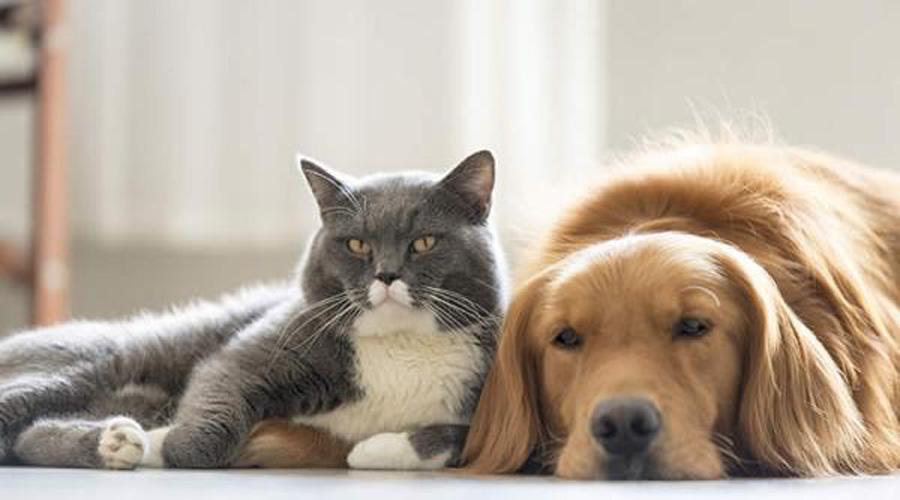 UNAM revela qué mascota es mejor para compañía, ¿perro o gato?   El Imparcial de Oaxaca