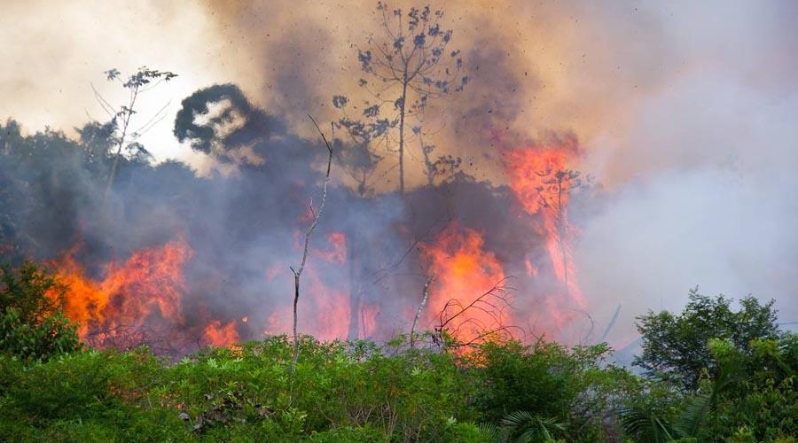Acusa Bolsonaro a ONGs de causar incendios en el Amazonas | El Imparcial de Oaxaca