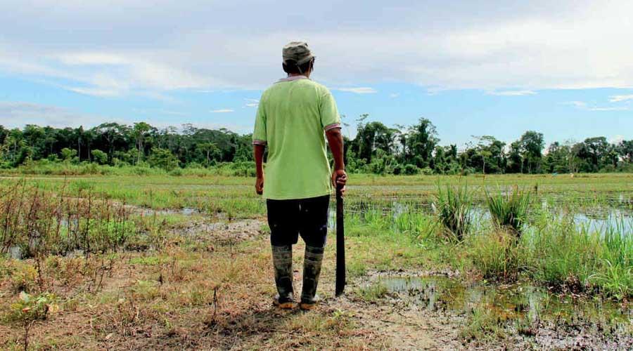 Llaman a proteger a los defensores ambientales en México | El Imparcial de Oaxaca