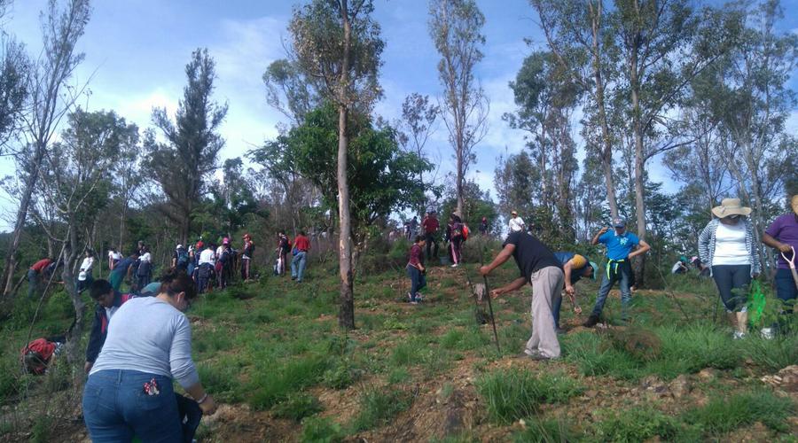 Realizan reforestación masiva en comunidades de la Mixteca | El Imparcial de Oaxaca