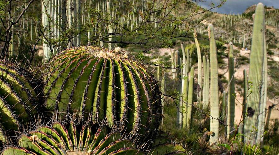 Premiarán a imágenes sobre la reserva de la Biósfera Tehuacán-Cuicatlán | El Imparcial de Oaxaca