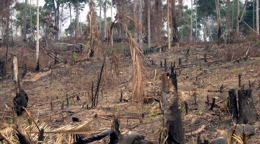 Alarmante degradación de suelos en Oaxaca | El Imparcial de Oaxaca