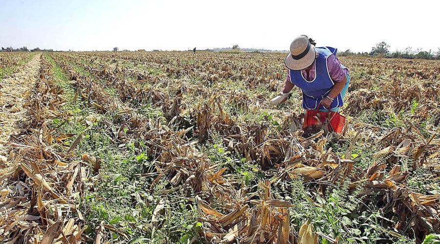 Anuncian campesinos de México paro de 48 horas; denuncian subejercicios | El Imparcial de Oaxaca