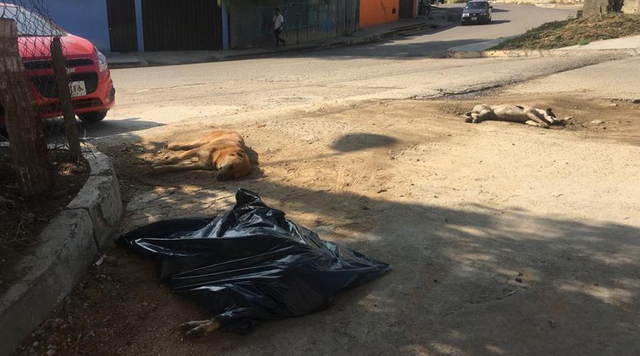 Vecinos denuncian el envenenamiento de perros en colonia Santa Anita   El Imparcial de Oaxaca