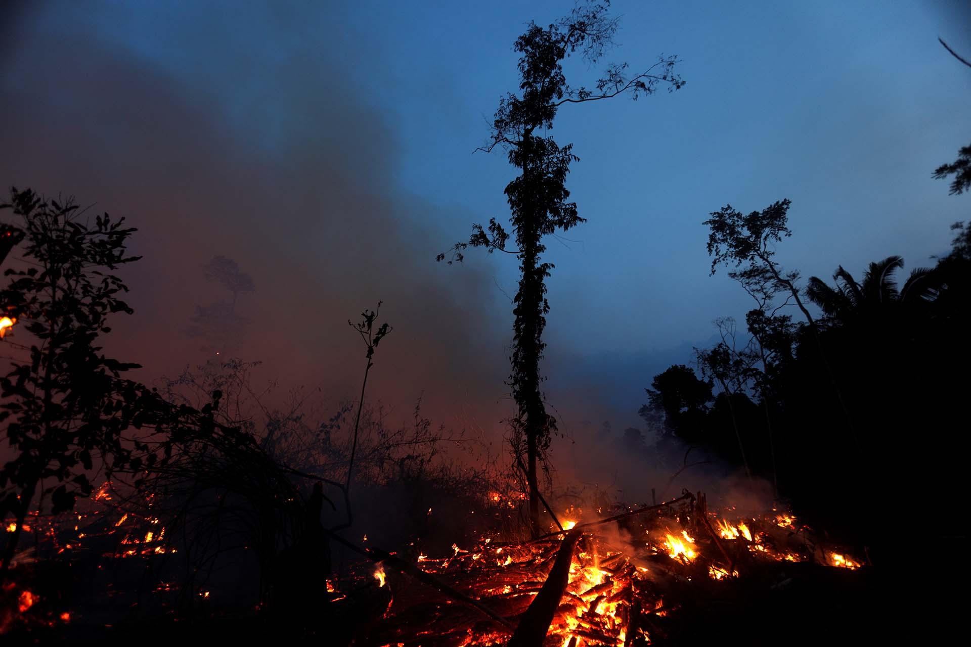 Crece más de 90 por ciento la deforestación del Amazonas en Brasil | El Imparcial de Oaxaca