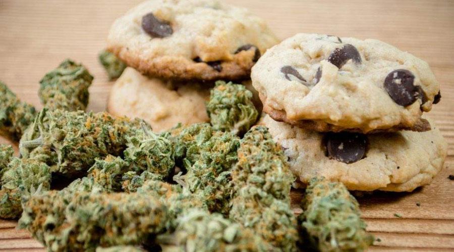 Perrito casi muere por comer galletas de mariguana   El Imparcial de Oaxaca