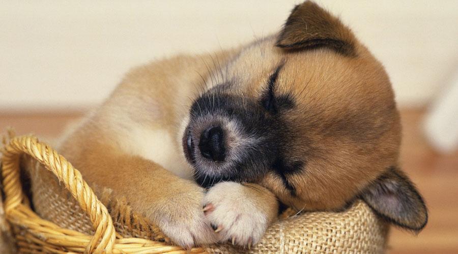 Confirman que los perros sueñan con las personas que más quieren   El Imparcial de Oaxaca