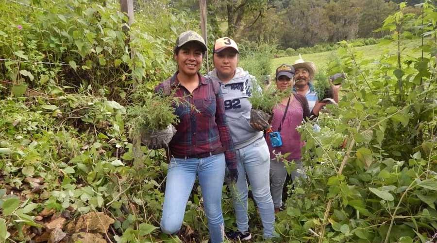 Buscan salvar pulmones en Itundujia | El Imparcial de Oaxaca