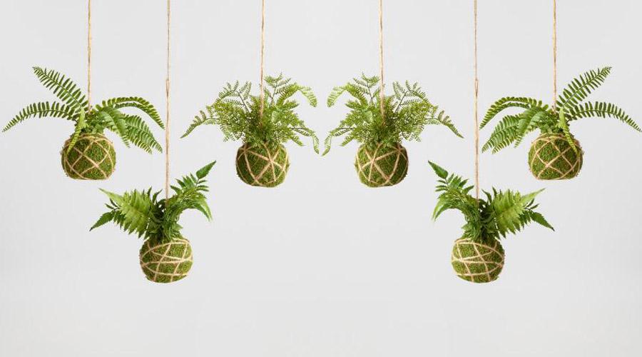 Kokedama, la maravillosa técnica de cultivo de plantas para embellecer tu hogar | El Imparcial de Oaxaca