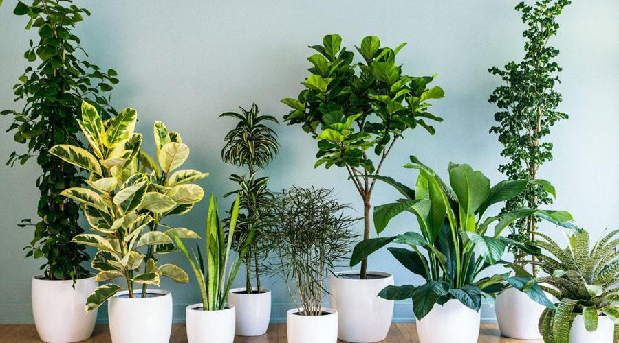 Estas son las plantas ideales para mejorar el aire de tu casa | El Imparcial de Oaxaca