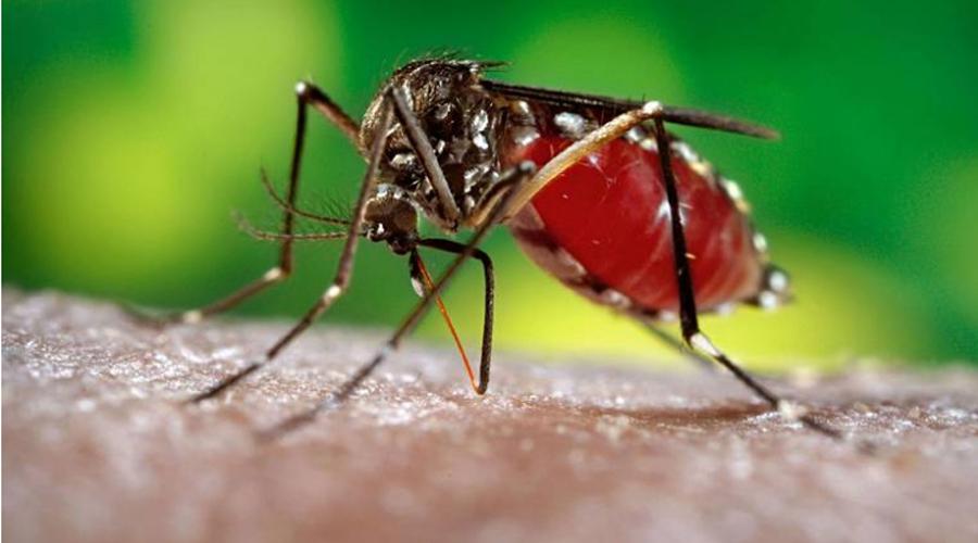 Imparable el dengue; confirman 1,693 casos en Oaxaca | El Imparcial de Oaxaca