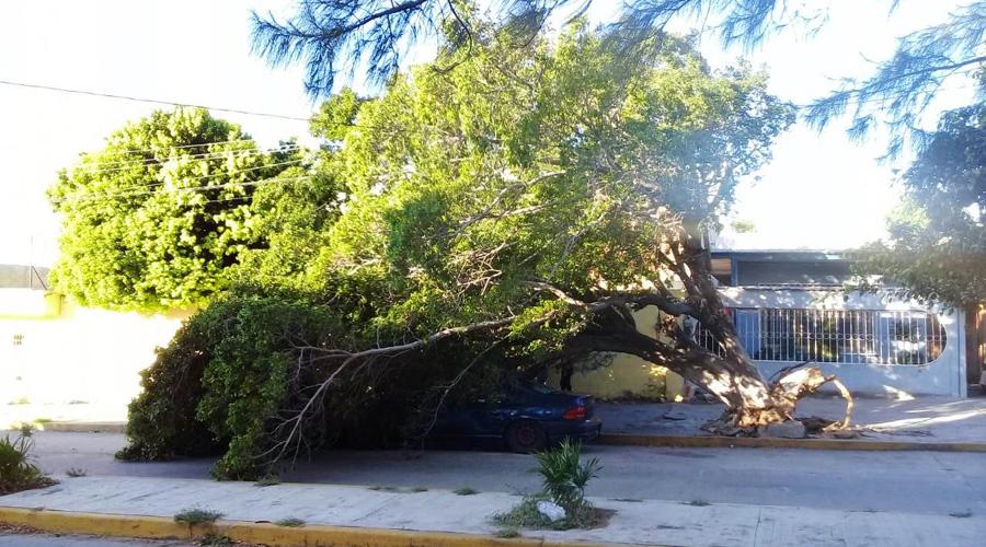 Lluvias y vientos dejan daños en el Istmo de Tehuantepec | El Imparcial de Oaxaca
