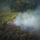 Incendios forestales, riesgo para la fauna