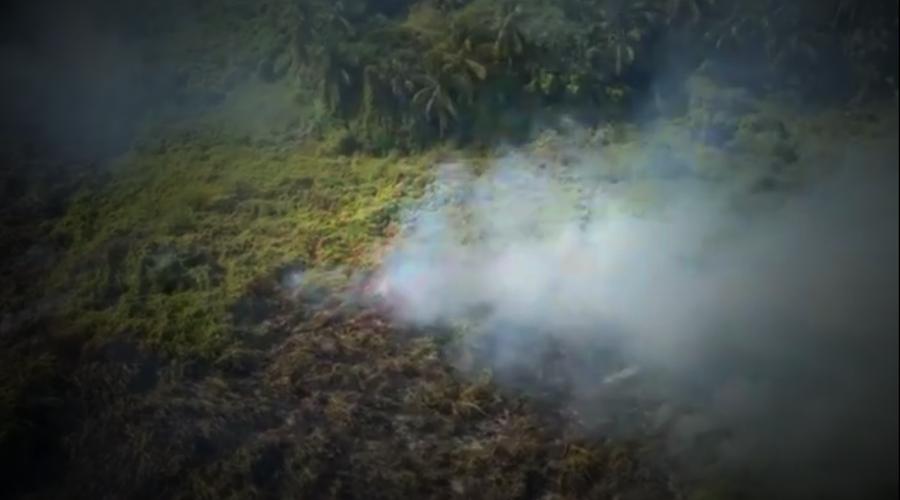 Incendios forestales, riesgo para la fauna | El Imparcial de Oaxaca