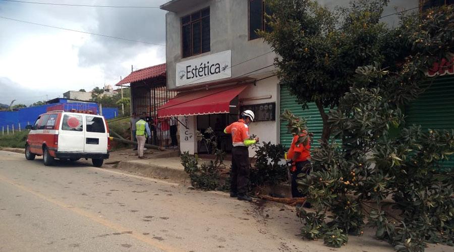 Por conducir en estado de ebriedad derriban árbol y poste en Huayápam   El Imparcial de Oaxaca