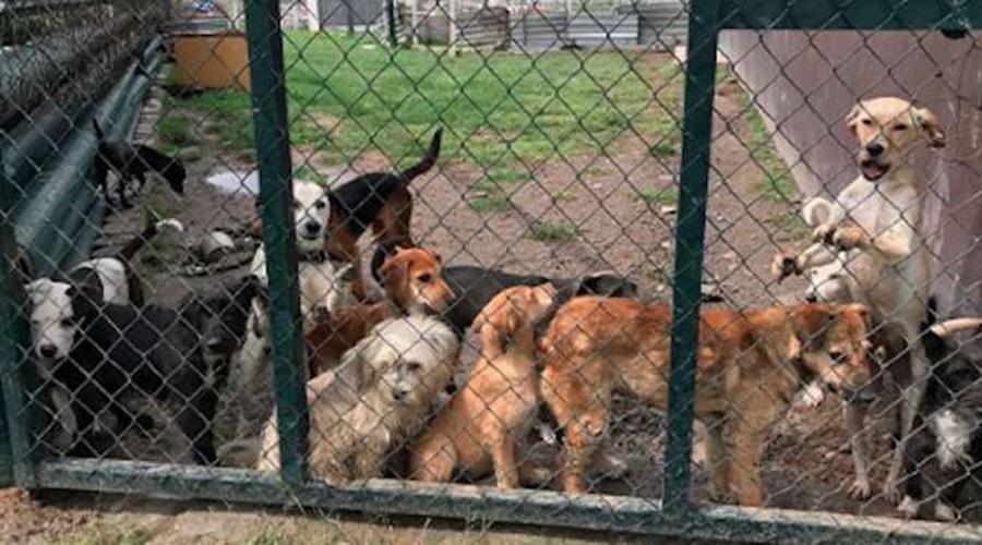 Aprueban ley para 'dormir' a animales rescatados | El Imparcial de Oaxaca
