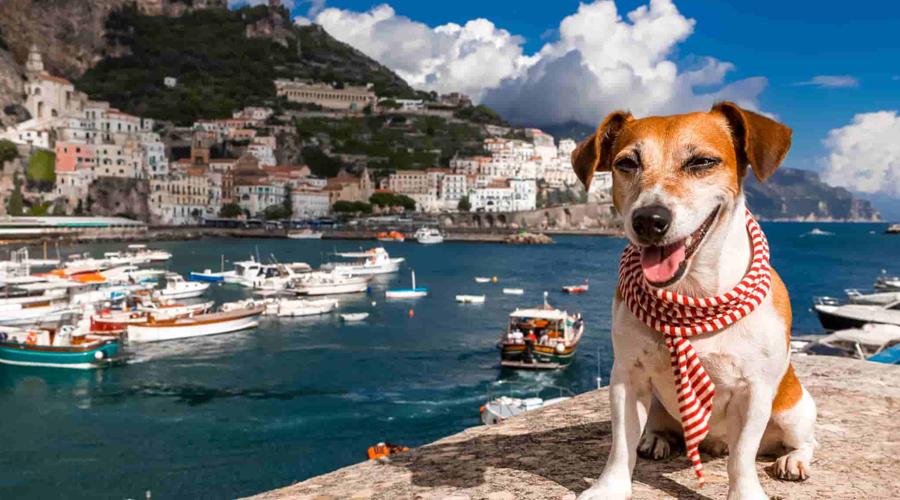 Senasica implementa el programa Mascota Viajero Frecuente | El Imparcial de Oaxaca