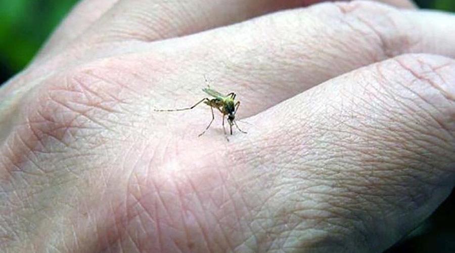 Desciende Oaxaca a quinto lugar en incidencia de dengue | El Imparcial de Oaxaca