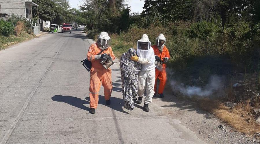 Ataque de abejas deja tres lesionados en Juchitán | El Imparcial de Oaxaca