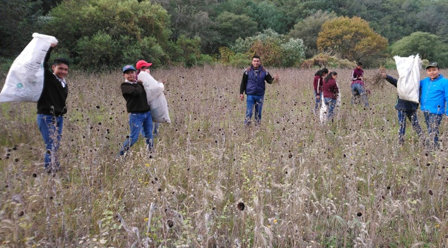Merma producción de maíz en la Mixteca | El Imparcial de Oaxaca