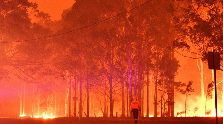 ¿Cuánto afecta los incendios forestales al resto del mundo? | El Imparcial de Oaxaca