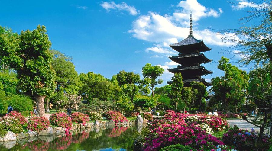¿Te gustaría viajar a Japón sin costo?  Una aerolínea obsequiará vuelos | El Imparcial de Oaxaca