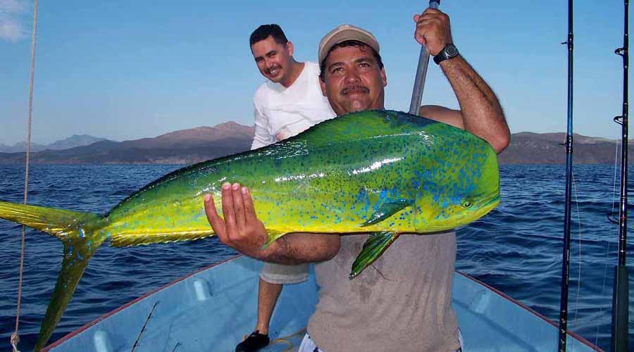 A la conquista del pez dorado   El Imparcial de Oaxaca