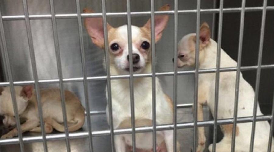 Al menos 270 perros fueron rescatados de veterinarios que les cortaban las cuerdas vocales | El Imparcial de Oaxaca