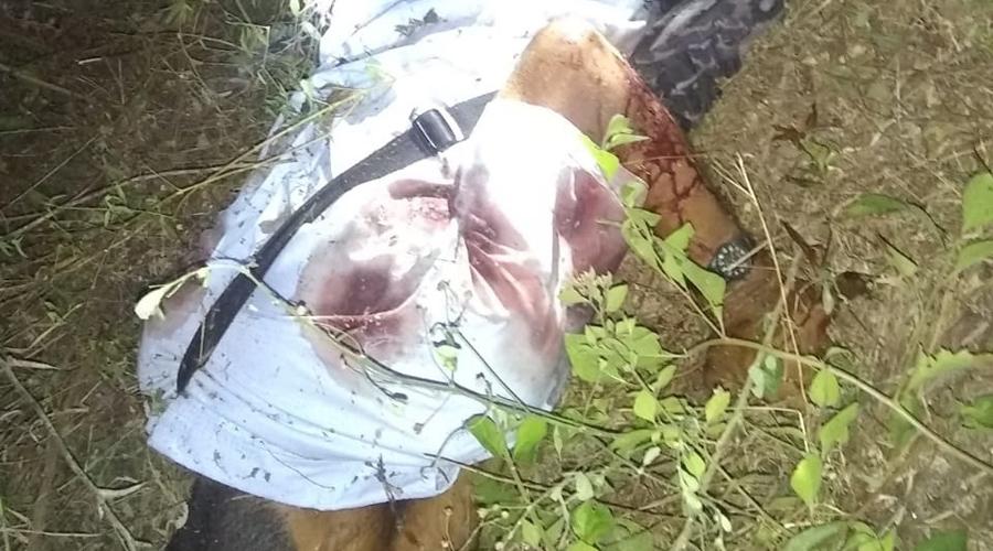 Lo hallan ejecutado en Pinotepa Nacional | El Imparcial de Oaxaca