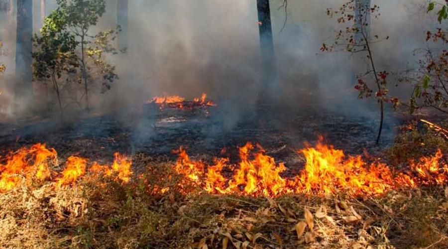 Reportan 42 hectáreas afectadas por incendios en el estado de Oaxaca | El Imparcial de Oaxaca