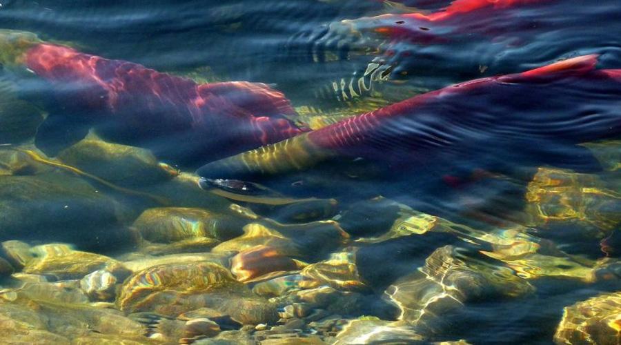 Científicos identifican un animal que no necesita oxígeno para vivir   El Imparcial de Oaxaca