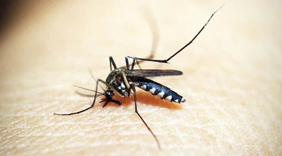 Tequila, Jalisco innova en el combate del dengue, zika y chikungunya con peces Guppy   El Imparcial de Oaxaca