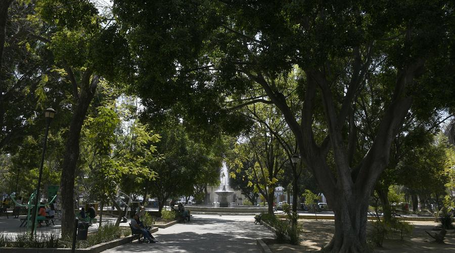 El Llano, un parque oaxaqueño con vida propia | El Imparcial de Oaxaca