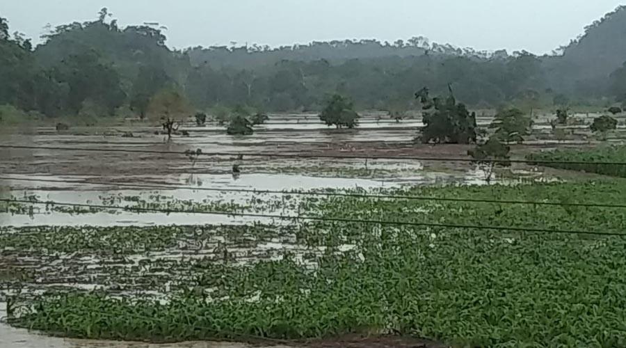 En el Istmo, lluvia atípica inunda cosecha