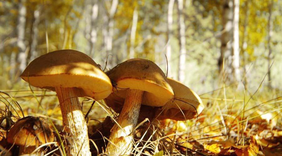 En Chernóbil crece hongo que podría proteger al mundo de la radiación | El Imparcial de Oaxaca