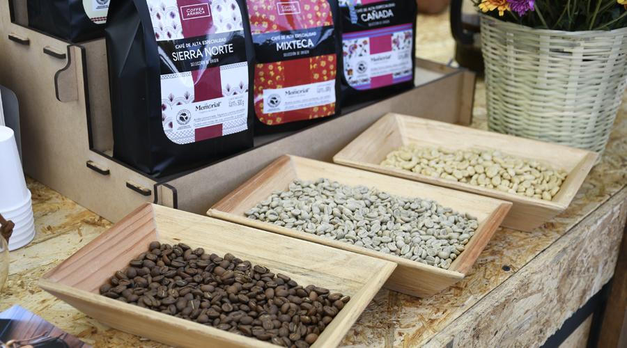 Pequeños productores de café en Oaxaca siguen en el olvido   El Imparcial de Oaxaca