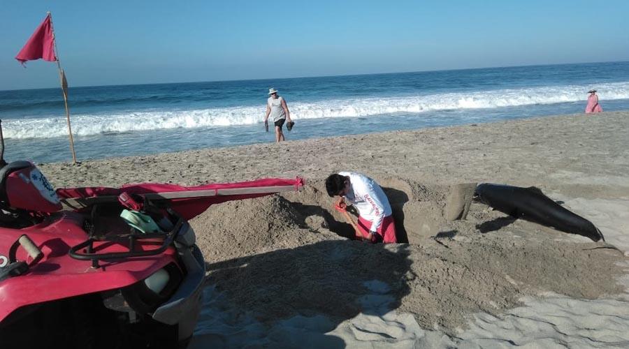 Mueren dos delfines en las playas de Puerto Escondido, Oaxaca