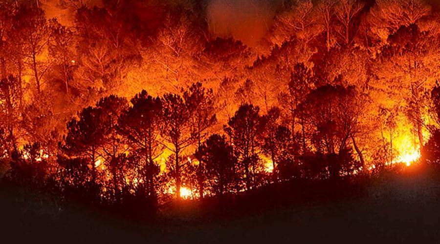 En Oaxaca Conafor se encuentra preparada ante los incendios forestales | El Imparcial de Oaxaca
