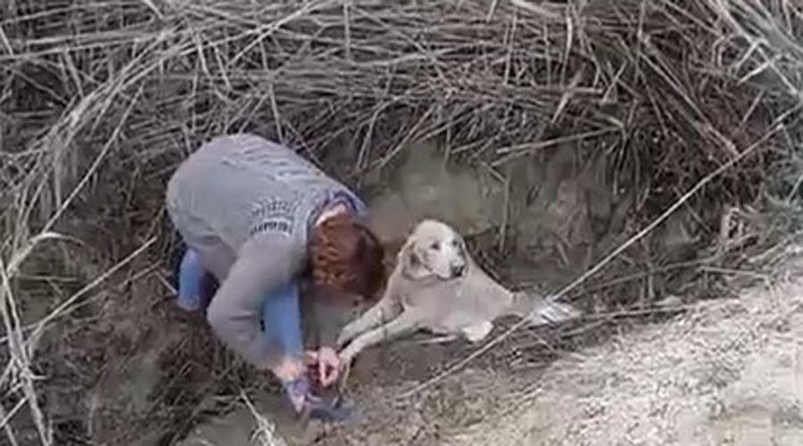 Video: activistas rescatan perro enterrado vivo en un barranco en España | El Imparcial de Oaxaca