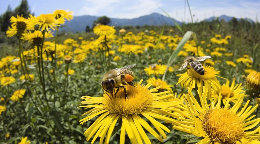 Agricultura intensiva, el enemigo mortal de las abejas | El Imparcial de Oaxaca